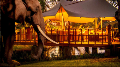 Bongwe-elephant-cafe-livingstone-cafe5