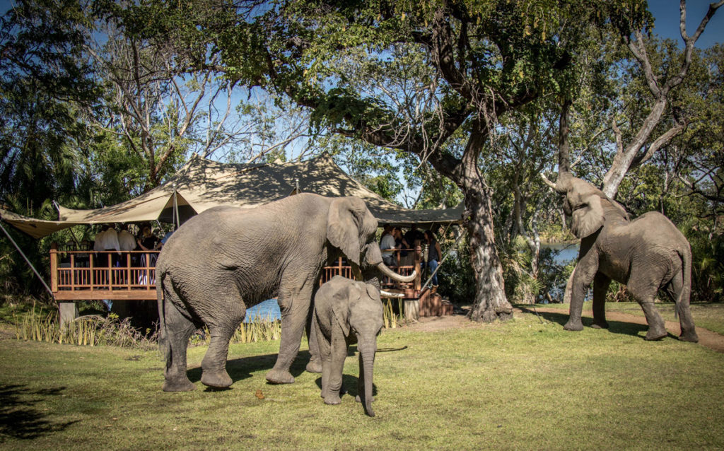 Bongwe-elephant-cafe-livingstone-elephants