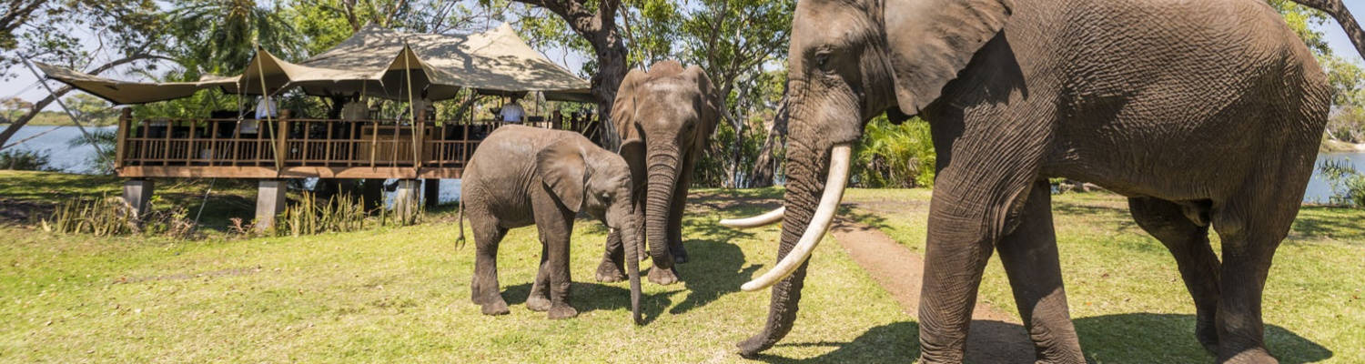 Bongwe-elephant-cafe-livingstone-header