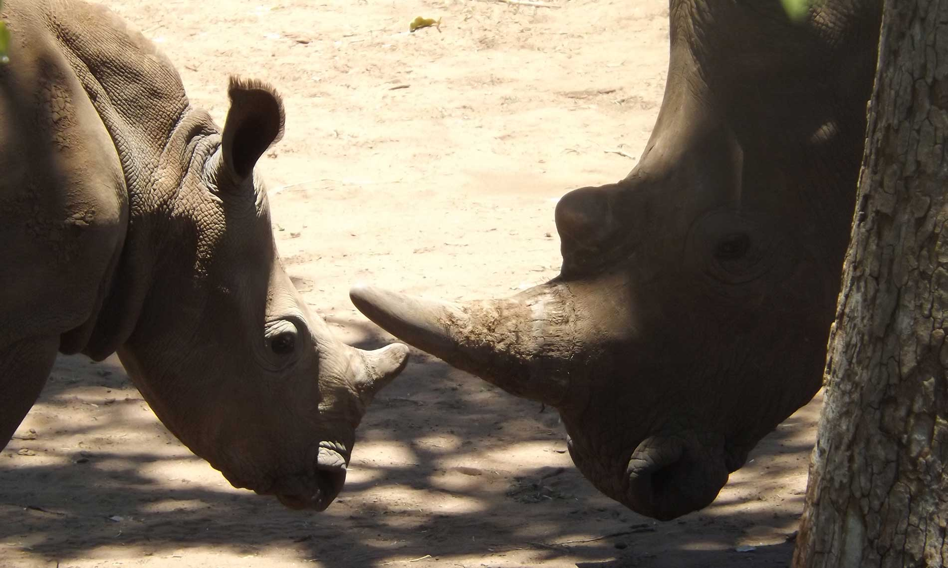 Bongwe-safaris-home-header4