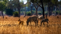 Bongwe-safaris-home-header5