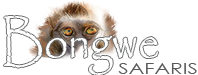 Safaris | Activities | Accommodation | Entertainment Logo