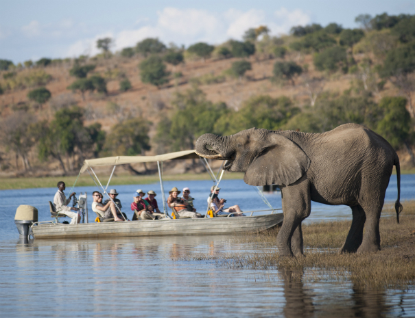 Chobe Day Trip with Bongwe Safaris