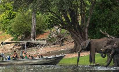 Chobe Day Trip with Bongwe Safaris