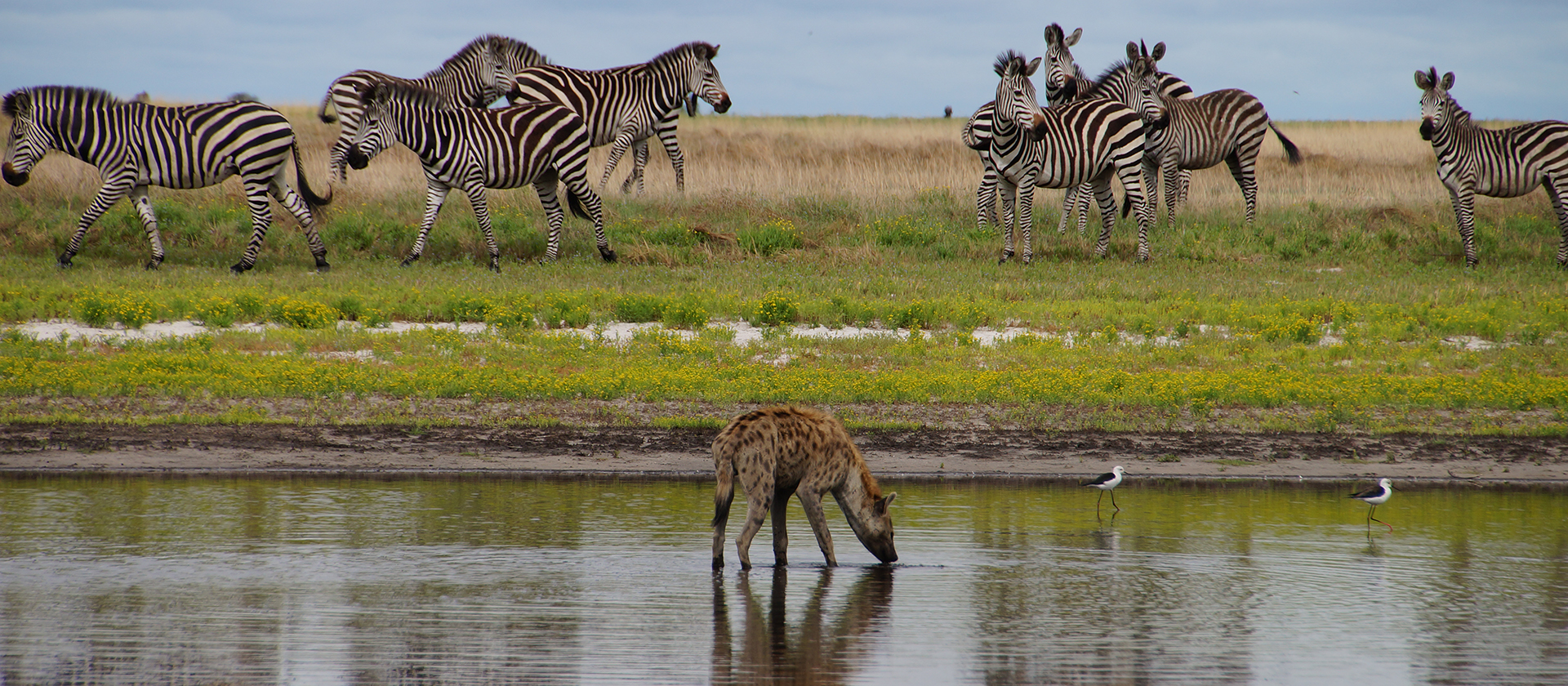 Liuwa Plains with Bongwe Safaris