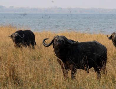 Wild Kafue Safari with Bongwe Safaris